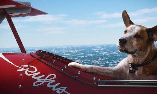 Мастер Чиф и собаки в новой рекламе Microsoft